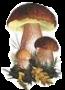 Funghi di bosco