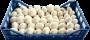 Funghi Champignon I°