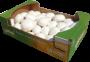 Funghi Champignon Minicollo